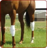 Knee Protection for Stallions-ReWrap Pro